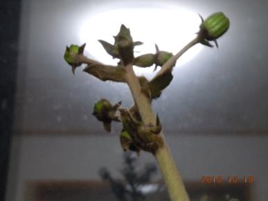 Tuwabuki19_002
