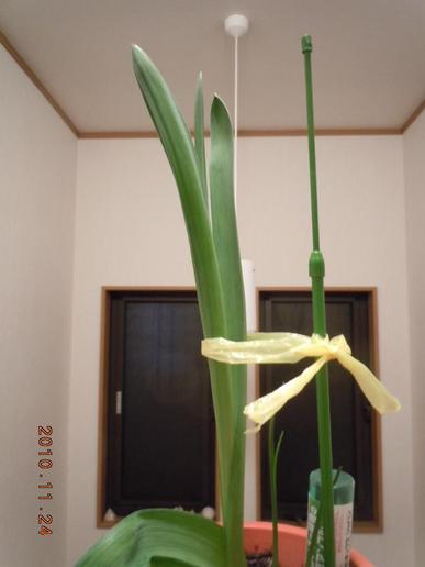 Oonisogaramu28_009