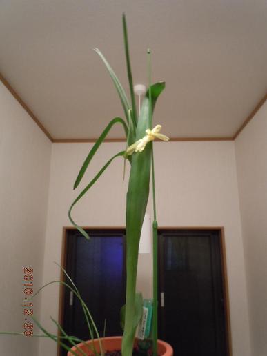 Oonisogaramu54_012