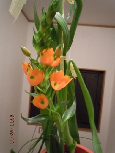 Oonisogaramu138_006